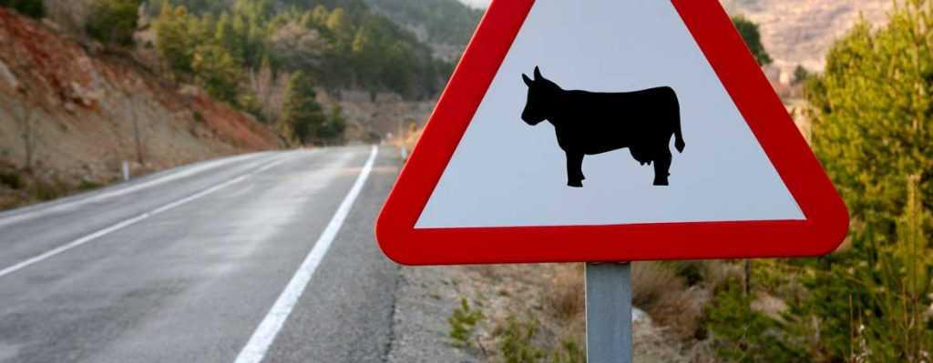 Сбил животное на машине что грозит, выплатит ли страховая ущерб