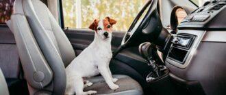 Как безопасно перевозить собаку в автомобиле